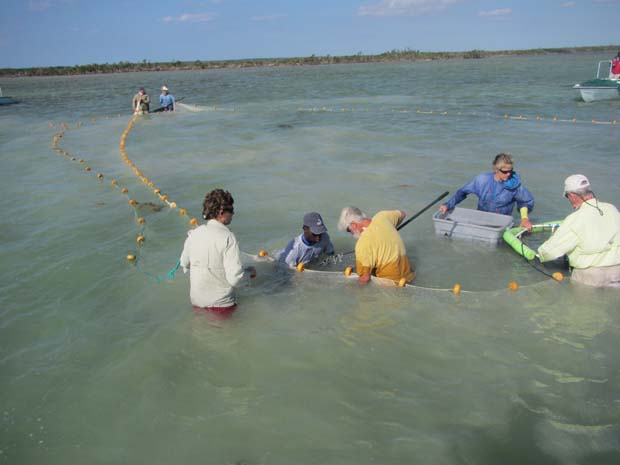 A crew comprised of scientists, guides, and volunteers tag bonefish as part of the Bahamas Initiative. BTT photo.