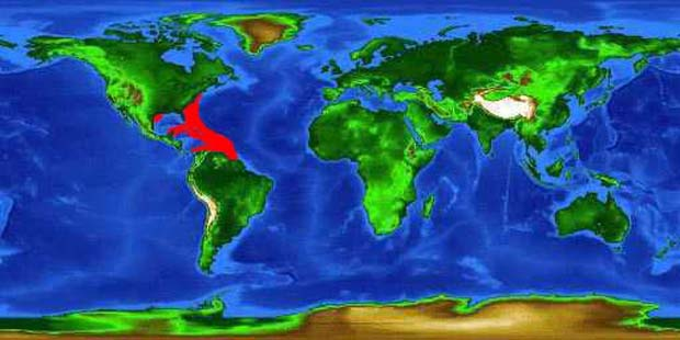 World distribution map for the cero mackerel.
