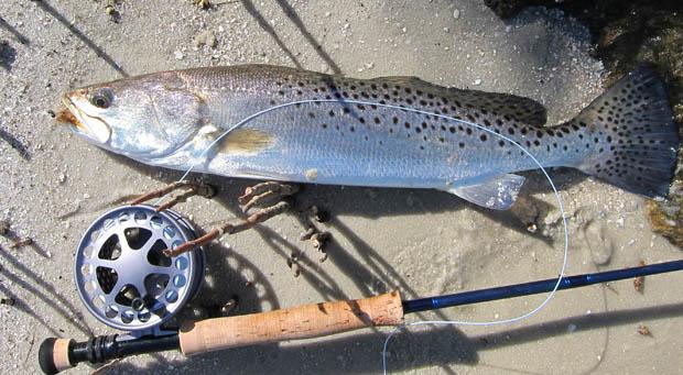 Photo credit C-Worthy Charter Fishing.