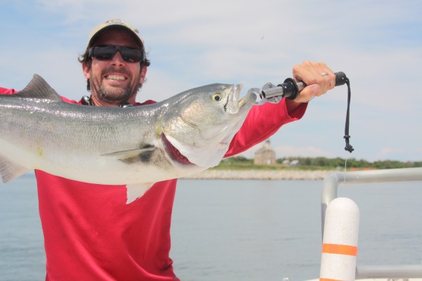Considerable digital risk with gorilla bluefish without the Boga-Grip on board. (Photo by A. Derr)