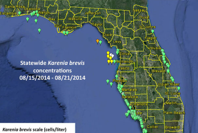 News: An unwelcome guest visits again; Karenia brevis