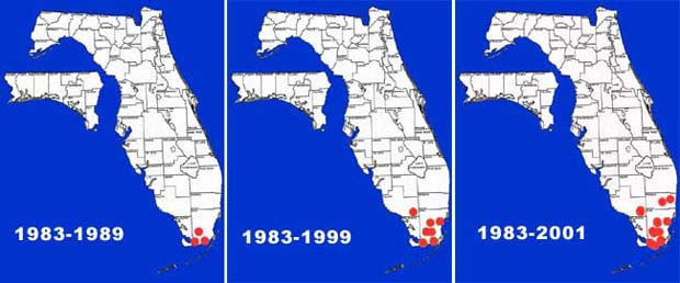 While the map shows moderate expansion of Mayan cichlids 91983 to 2001, a freeze in 2010 decimated many stcks of fish, reptiles and mamal's her in South Florida. Most have made strong comebacks. These ciclids have rebounded well.