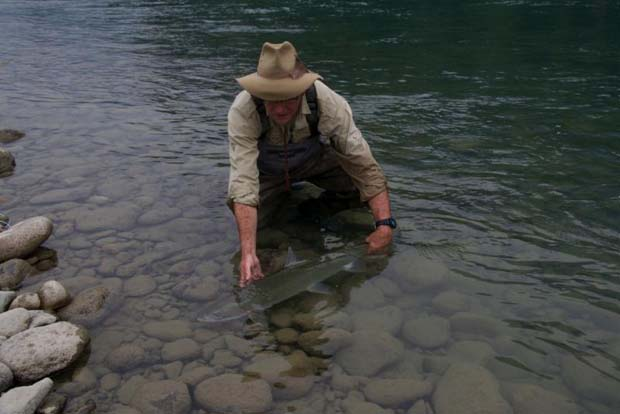 News: From the west – one man's steelhead and salmon report