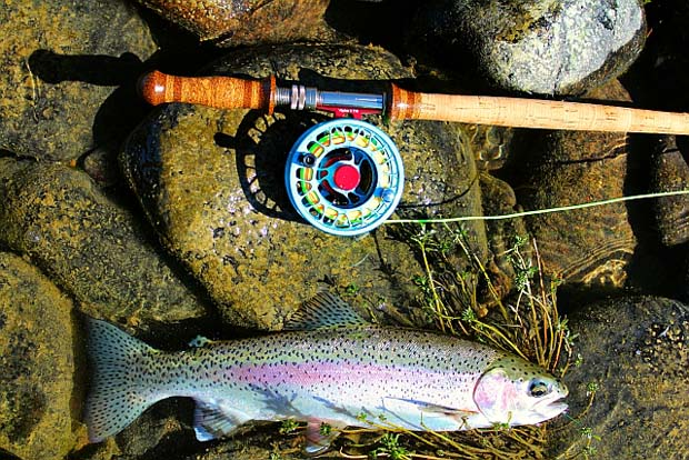 Thompson-River-Rainbow-Trout-with-11-4five-R.B.-Meiser-switch-rod. Photo by