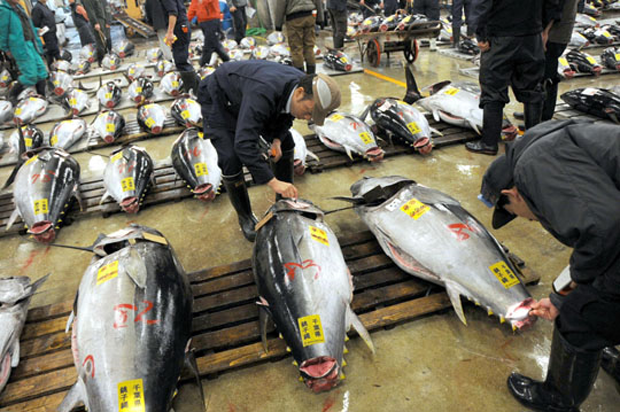 News: Overfishing bluefin tuna reaches tipping point