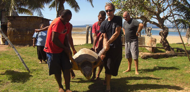 Fishermen in Fiji help Jeffrey Polovina (front right) carry a loggerhead sea turtle that is about to be outfitted with a satellite tag. This tagged turtle will help scientists identify habitats and migration routes that are important to loggerhead sea turtles