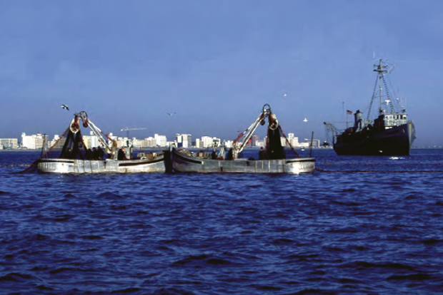 Conservation: Understanding the importance of forage fish