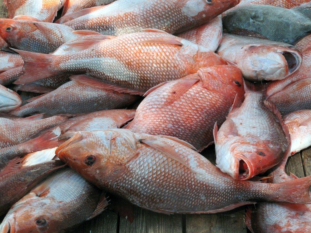 News: Recreational Fishing Alliance goes politically deep