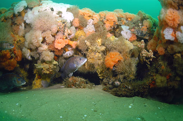 Take Action: Stop New England fisheries managers from eliminating habitat protections
