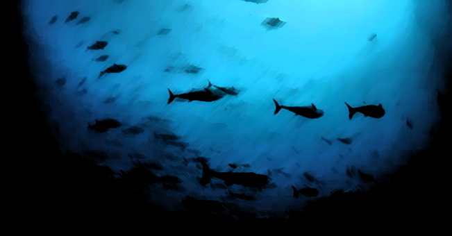 News: ICCAT ignores science and increases quota for Atlantic bluefin tuna