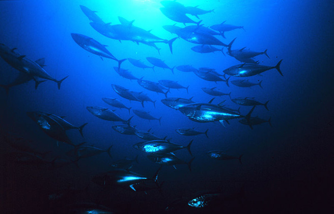 News: White House issues ambitious plan to fight illegal fishing