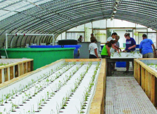 Science: Mote Marine's aquaponic fish & veggies worth their salt