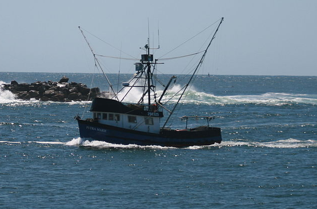 News: NC state fisheries agency announces new limits for striped bass