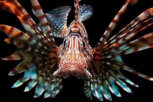 Beauty is a beast. NOAA image.