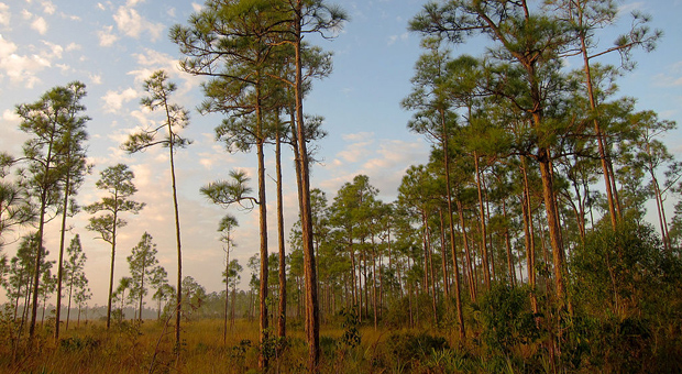 News: Obama Everglades trip to highlight week focusing on climate change