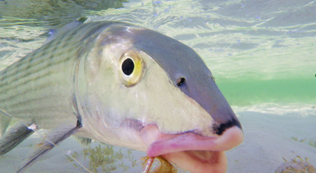Of Interest: Bonefish, sunscreen and slime