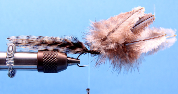 "Step 2: Marry two pairs of matched grizzly saddle hackles (4 feathers total, two on each side) and secure them so that the tips of the feathers extend 3 inches past the bend of the hook.  Marrying the hackles"" refers to placing the concave or undersides of the feathers together. Another common term for this technique is ""praying hands."" When wet, all the feathers come together and look as one."