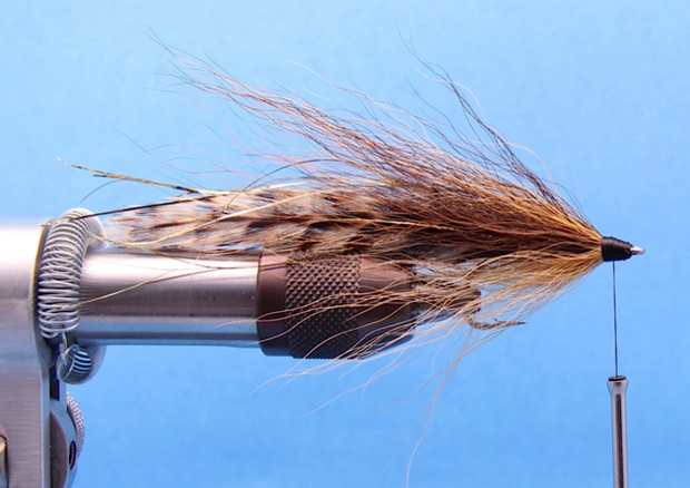 Step 7: On the underside of the fly tie in a lighter color bundle of bucktail.  The length of this bundle should be slightly shorter than the top two bundles.  I like to cut the hair for the top and bottom of the fly from the same bucktail.  The darker hair is typically taken from the back of the bucktail and the lighter or belly color of the fly is created from the underside or lighter portion of the bucktail.   It's ok of the two colors blend together, or if there are a few stray light or dark colored hairs, it will give the fly a more natural look.