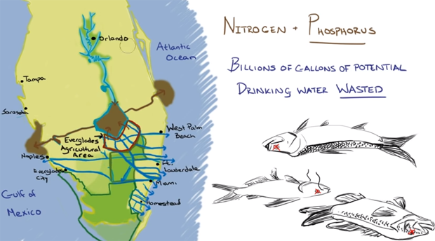 Video: Save Florida Water – Everglades Restoration