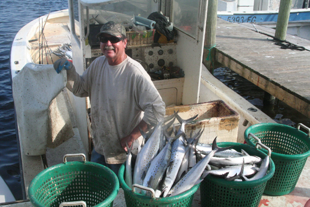 Commercial fisherman, Ben Hartig, with a catch of Spanish mackerel that stayed in his chum slick. Either restrictions or shortages, could affect his ability to earn a living.