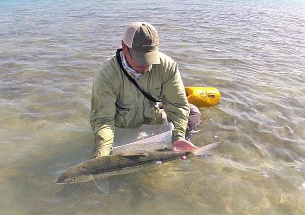 Advice: In the Bahamas, a bonefish waits for no man