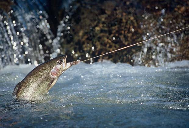 Feature Story: The easy way down to where the fish are