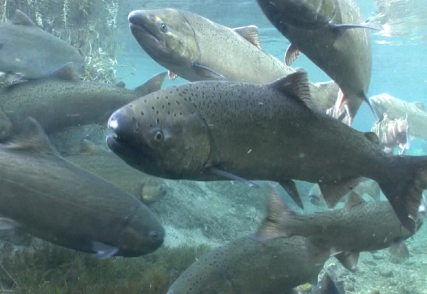 Conservation: New bill undermines former Magnusson-Stevens success