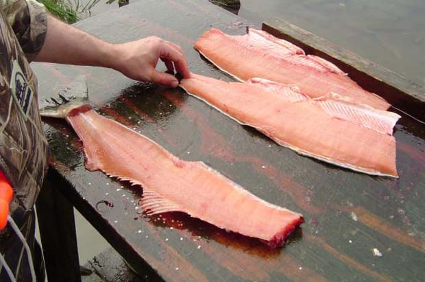 how to butcher a fish