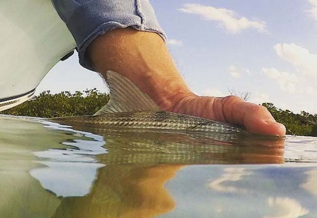 Advice: Go-to flats flies for bonefish and permit. Classics for a reason…