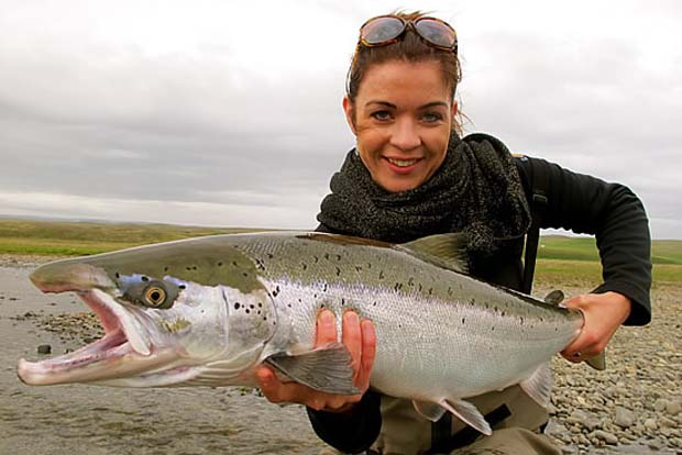 An Iceland Atlantic salmon fresh from the sea.