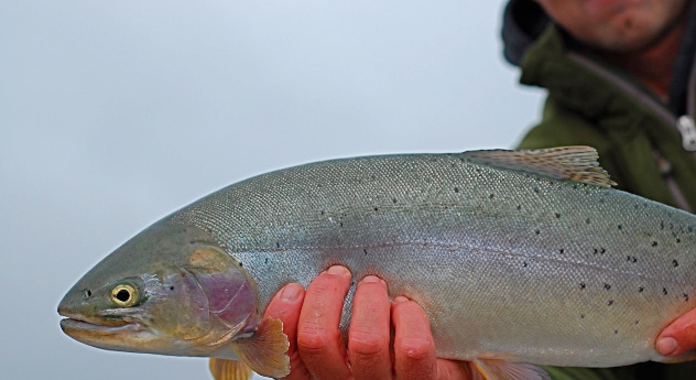 Of interest: 5 trout fishing havens perfect for your family vacation