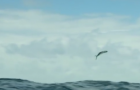 Video: Flying Fish, a day in the life…