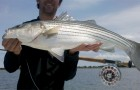Mass. legislation may take striped bass off the menu