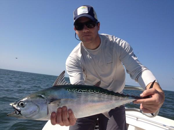 False Albacore tuna. Photo by Derr.