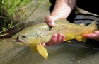 Of Interest: Is there a 'Canary' in the trout waters we fish?