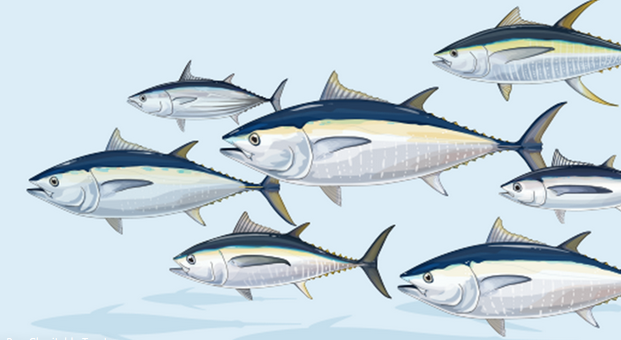 Conservation: Netting Billions – A global valuation of tuna