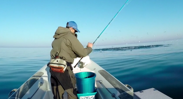 Video: Tuna on a dry fly