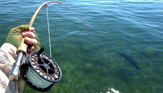 Omage courtesy of Gringo Fishing Services, Venice, Louisiana (venicelafishingguides.com).