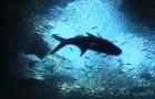 Video: Silver Kings Season 3 trailer