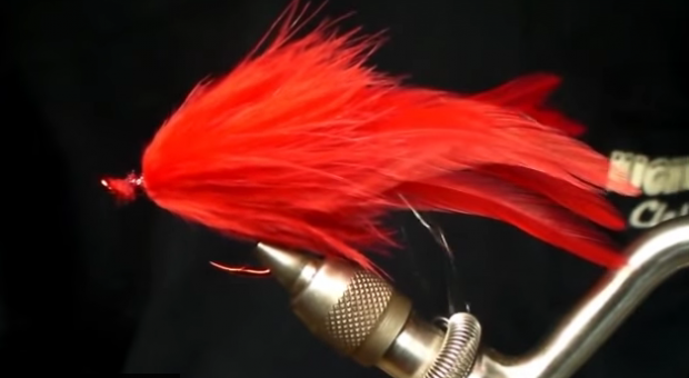 At The Vise: Red Shark Fly