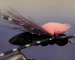 Fly Tying: If there is a terrestrial ribeye, it might be a cricket