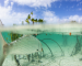 """Destinations: Oliver White, Bahamian Lodge owner reflects on """"Finding"""""""