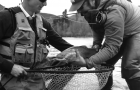Destinations: Make mine Alaska. In the fall it's big, hungry trout
