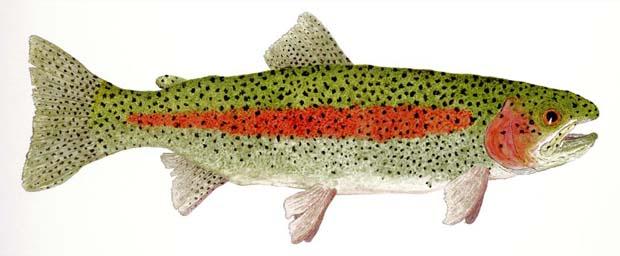 virginia_rainbow_trout_production_border-1066x465