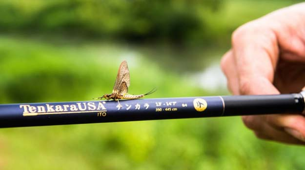 A picture worth 10,000 words. Mossy Creel Fly Fishing image.