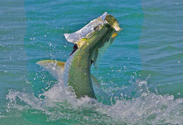 Everglades National Park: An area closed for 30 years opens to anglers!