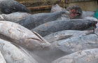 News: Bahamas considers granting commercial fishing rights to Chinese