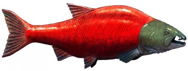 ancient-salmon-spikey-teeth
