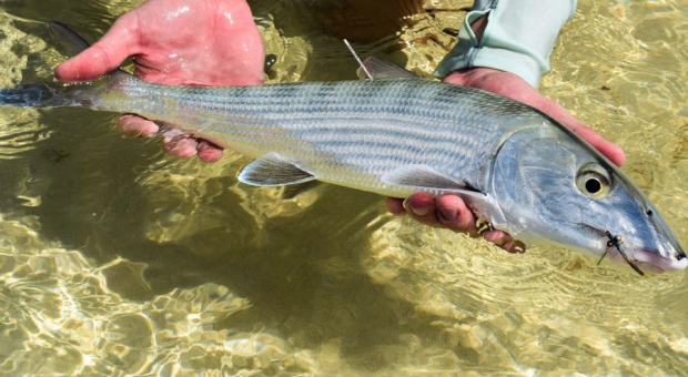 The Bahamas: The $100m fishing question