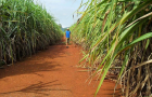 Sugar growers to state: No sale on our farmland south of Lake Okeechobee